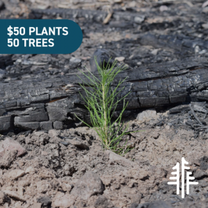 Plant 50 trees for $50