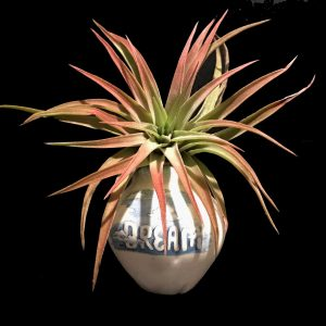 Tilla Critters Dream On One of a Kind Airplant Creations by Chili Fiesta Handiworks