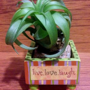 Tilla Critters Lovely Lucy One of a Kind Air Plant Creations from Chili Fiesta HandiWorks